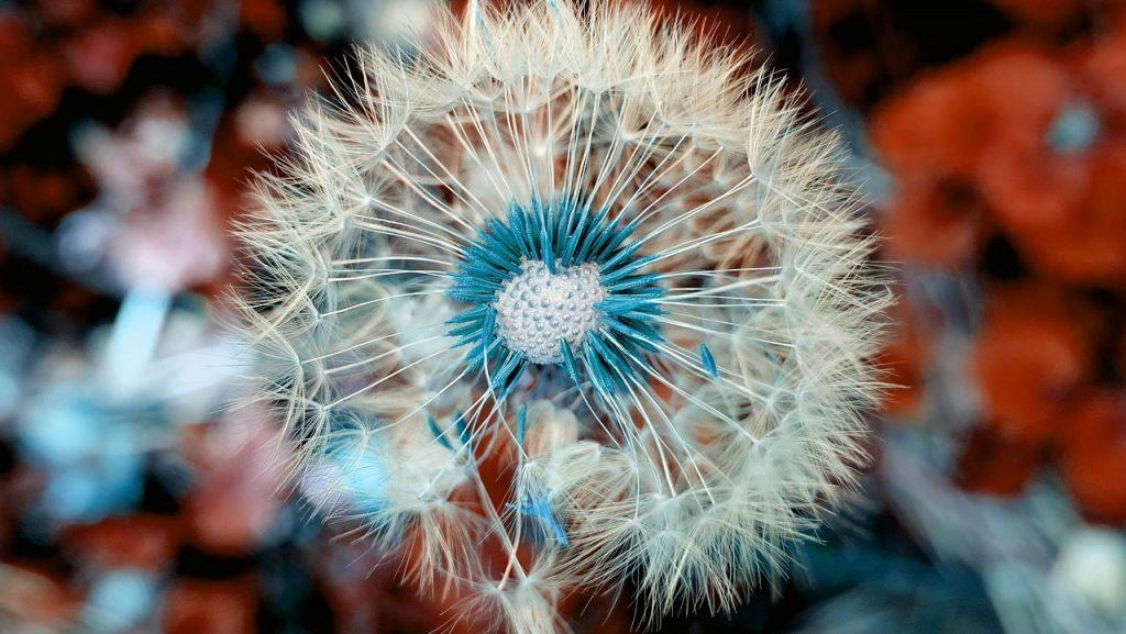 cropped-dandelion-3597681_1280.jpg